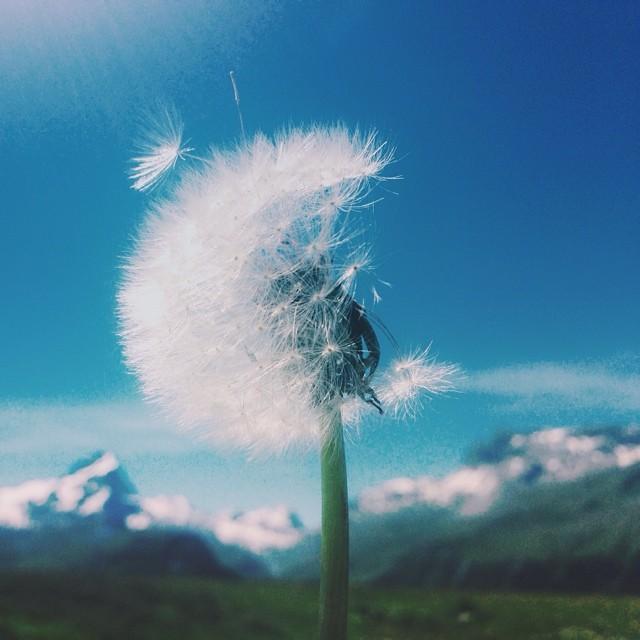munich-and-the-mountains-best-instagram-@naomimeran